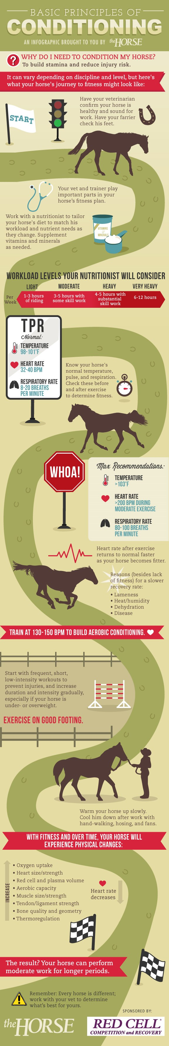 conditioning-for-performace-infographic