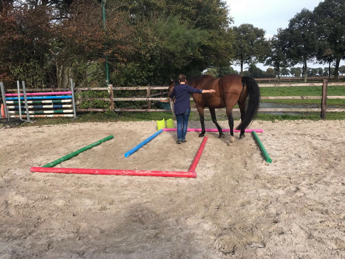 EquiBootcamp oefening labyrint