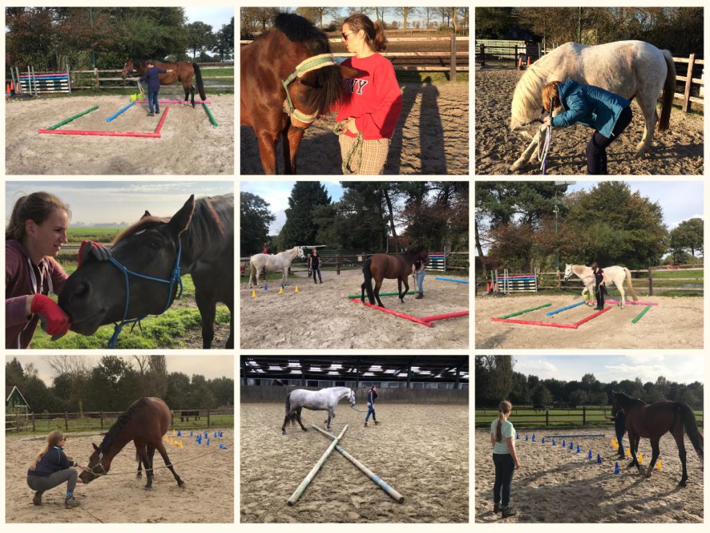 EquiBootcamp fitness grondwerk training voor paarden