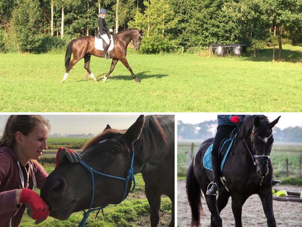 EquiBootcamp training ervaring paard grondwerk fitness dressuurpaard