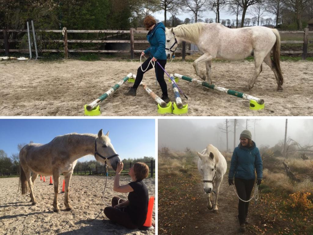 EquiBootcamp ervaring met fitness grondwerk training senioren paard