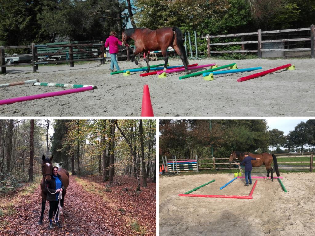 ervaring met EquiBootcamp fitness training voor paarden